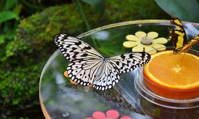 butterfly-3252893_640